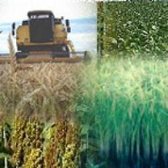 La expansión agrícola, ¿llegó para quedarse?